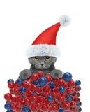 Gatto sveglio in un cappello di Santa Claus con il fondo delle palle di natale Immagine Stock Libera da Diritti
