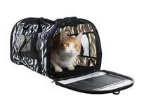 Gatto in trasportatore morbido parteggiato su fondo bianco fotografia stock libera da diritti