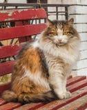 Gatto tricolore che si siede su un banco Fotografia Stock