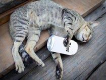 Gatto ubriaco Fotografia Stock Libera da Diritti