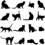 Gatto umano dell'animale domestico Fotografia Stock