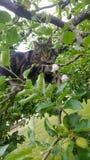 Gatto in un albero fotografie stock
