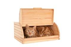 Gatto in un contenitore di pane Fotografie Stock Libere da Diritti