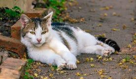 Gatto in un giardino che guarda diritto nella macchina fotografica Fotografie Stock