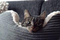 Gatto in un letto lanuginoso Fotografie Stock Libere da Diritti