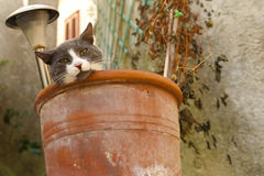 Gatto in un POT di fiore Fotografia Stock