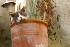 Gatto in un POT di fiore fotografia stock