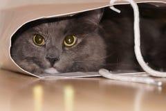 Gatto in un sacchetto Fotografie Stock Libere da Diritti