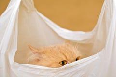 Gatto in un sacchetto Immagine Stock