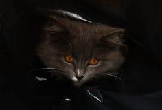 Gatto in un sacchetto Immagini Stock