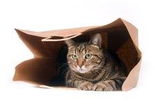 Gatto in un sacchetto Fotografia Stock
