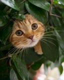 Gatto in un vaso di fiore Fotografia Stock