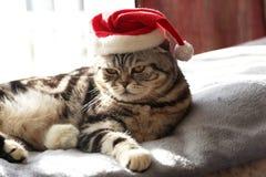 Gatto in un vestito del gattino Britannici/di Santa Claus Shorthair Fotografie Stock