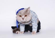 Gatto in un vestito del marinaio. Fotografia Stock Libera da Diritti