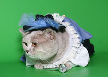 Gatto in un vestito del moschettiere. Fotografia Stock