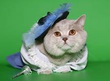 Gatto in un vestito della corte. Fotografia Stock