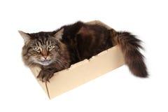 Gatto in una casella Fotografia Stock Libera da Diritti