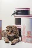 Gatto in una casella Fotografie Stock Libere da Diritti