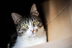 Gatto in una casella Immagine Stock
