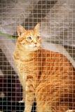 Gatto in una finestra Fotografie Stock Libere da Diritti