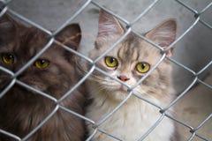 Gatto in una gabbia Immagini Stock