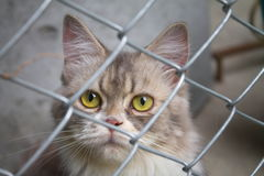 Gatto in una gabbia Fotografie Stock