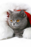 Gatto in una protezione di Santa Klaus. Fotografie Stock Libere da Diritti