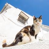 Gatto in una via Fotografie Stock