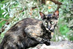 Gatto unico (forse piccolo spaventoso) su di olivo fotografie stock libere da diritti