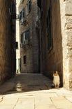 Gatto urbano del vagabondo Fotografia Stock