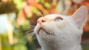 Gatto vago che esamina cielo con luce calda fotografie stock libere da diritti