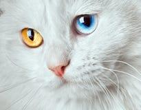 Gatto Varicoloured di bianco degli occhi fotografia stock libera da diritti