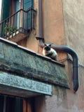 Gatto a Venezia Fotografia Stock