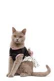 Gatto vestito Fotografia Stock Libera da Diritti