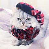 Gatto vestito Fotografia Stock