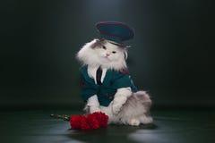 Gatto vestito come generalità Fotografie Stock