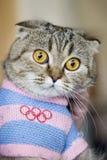 Gatto in vestito olimpico Fotografie Stock