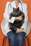 Gatto veterinario della holding. Fotografia Stock