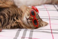 Gatto in vetri rossi e cappello rosso Immagine Stock Libera da Diritti