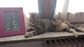 Gatto vicino ad una foto del gatto Fotografie Stock