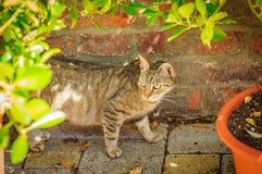 Gatto vicino al muro di mattoni con il vaso di fiore Fotografia Stock