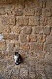 Gatto vicino alla parete Immagine Stock
