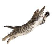 Gatto volante o di salto del gattino isolato Fotografia Stock