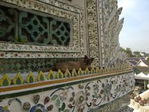 Gatto in Wat Arun - il Temple of Dawn a Bangkok Tailandia fotografia stock