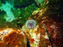 gatubarn för grönt hav Royaltyfria Foton