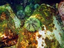 gatubarn för grönt hav Arkivbilder