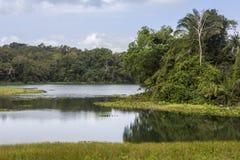 Gatun Lake and rainforest Stock Photos