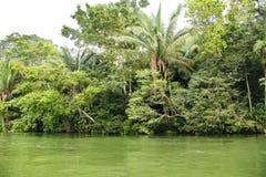 Gatun sjö, frodig vegetation på shoreline, Panama royaltyfri bild