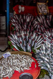 Gatunki ryba zdjęcie stock
