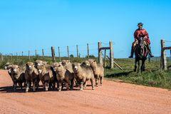 Gaucho de Cuchilla del Ombu, Tacuarembo, Uruguay Fotografía de archivo libre de regalías